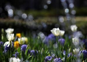 Dallas Arboretum - Sunday, March 4th