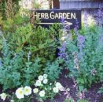 herb garden1