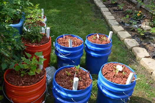 container gardening container gardening 2 you will need to bring two 5 gallon buckets - 5 Gallon Bucket Garden